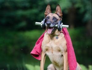trick-dog-trick-malinois-dog-show-trick-37735-1-1